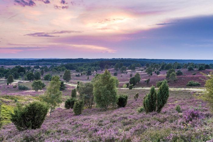 Gesundheitsamt Heidekreis Landschaft